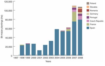 Como puede observarse en el gráfico, España es el país europeo donde existe una mayor superficie cultivada de maíz transgénico Bt.